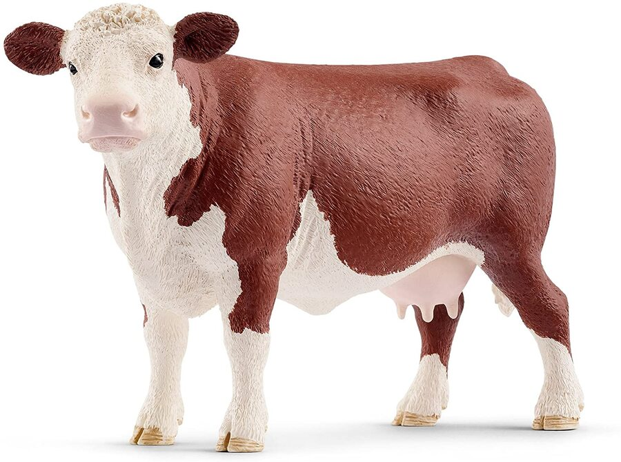MUCCA HEREFORD